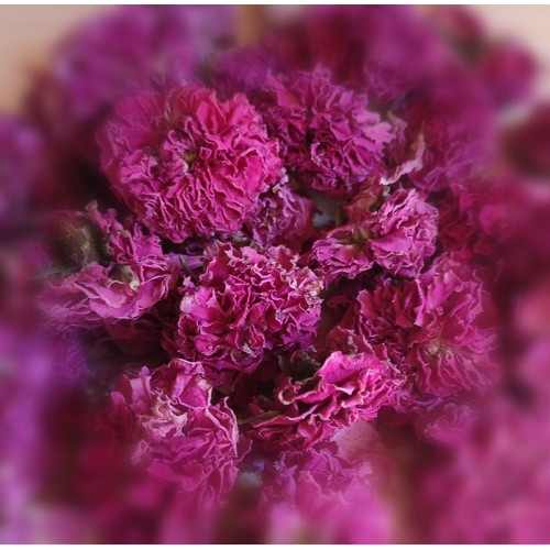 Rose della Valle Scrivia Essiccate Bio