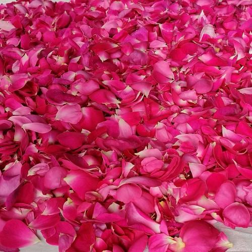 1kg - Petali freschi bio di Rosa Centifolia