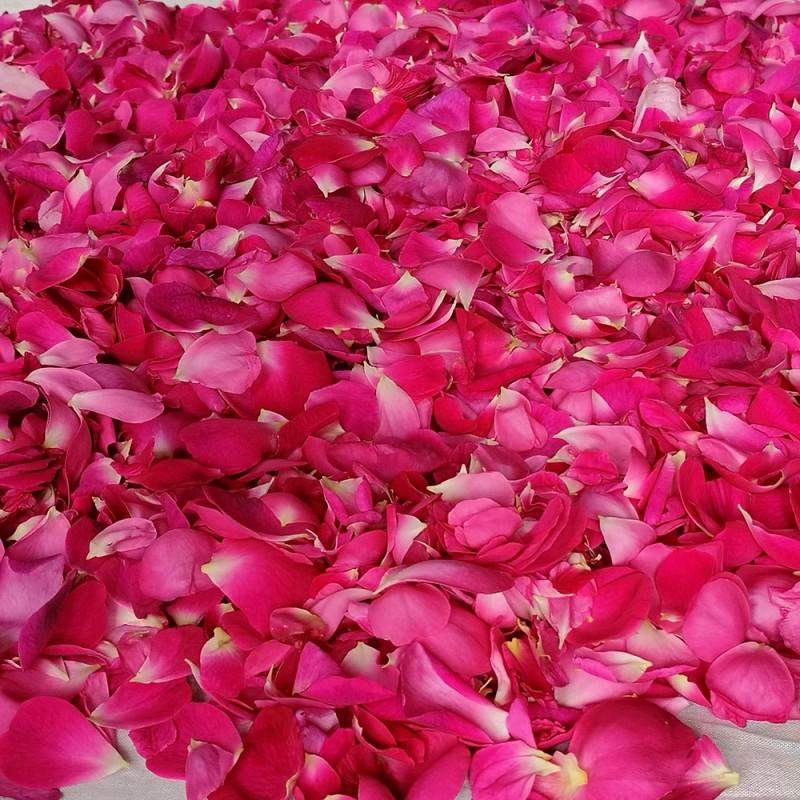 Petali freschi bio di Rosa Centifolia